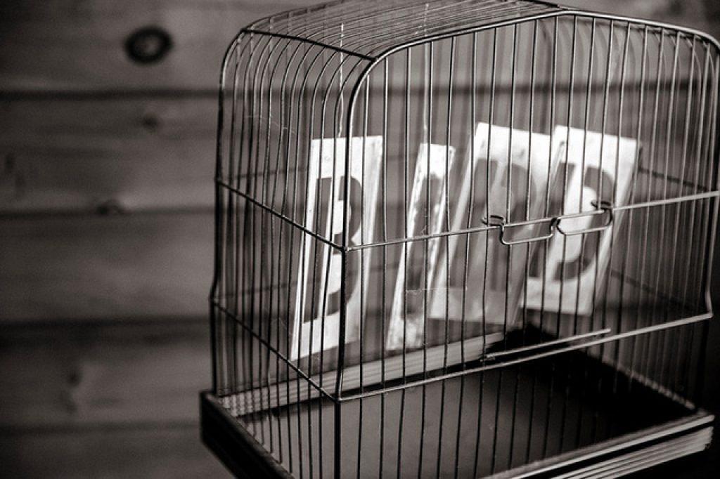 Quy luật hiệu ứng lồng chim